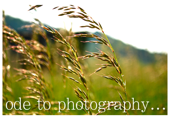 ode to photography...