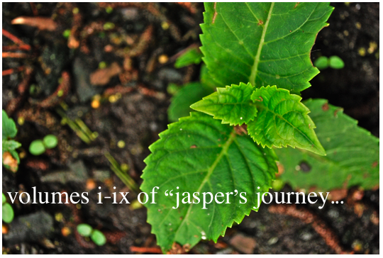 volumes i-ix of jasper's journey
